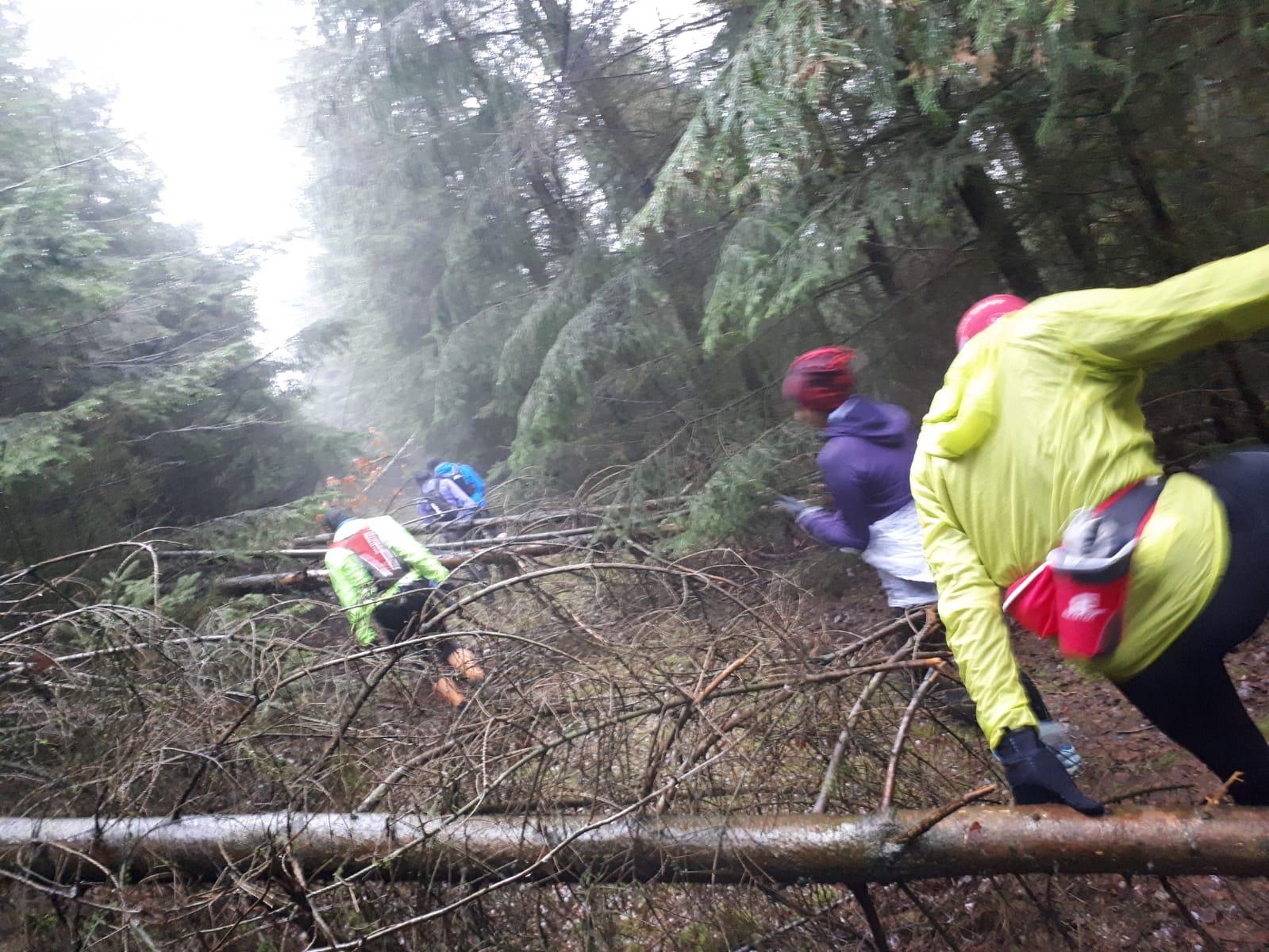Lauftraining mit Hindernissen - umgefallene Bäume versperren den Weg
