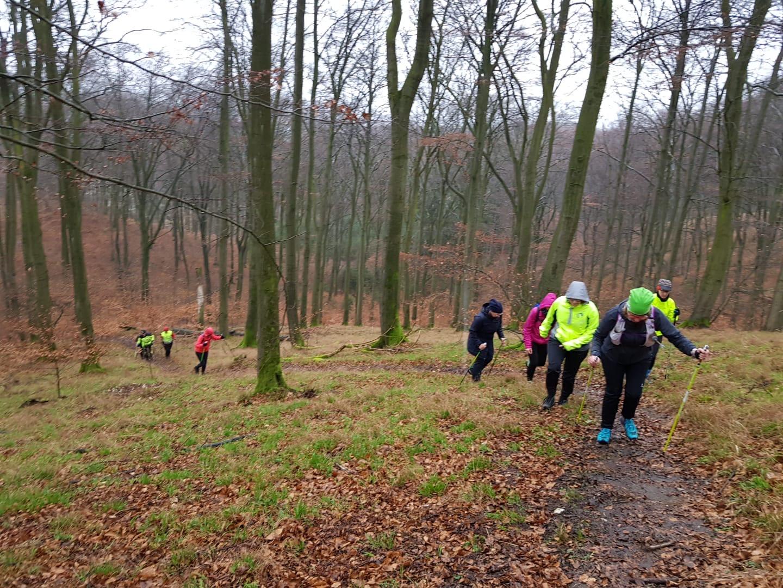 Kleine Walking-Gruppe bergauf im Teutoburger Wald